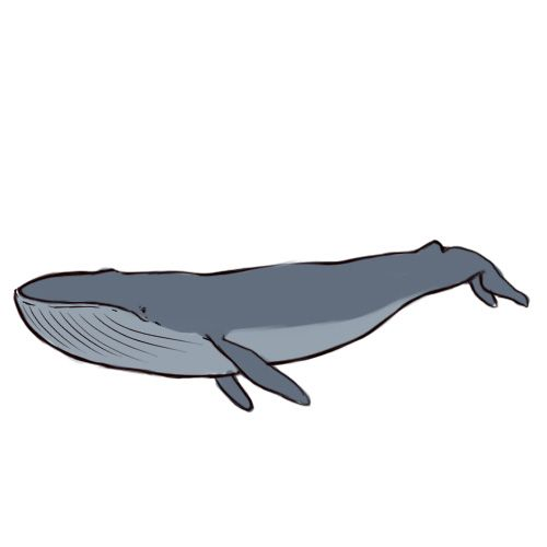 500x500 How to draw a blue whale  Embroidery Ideas