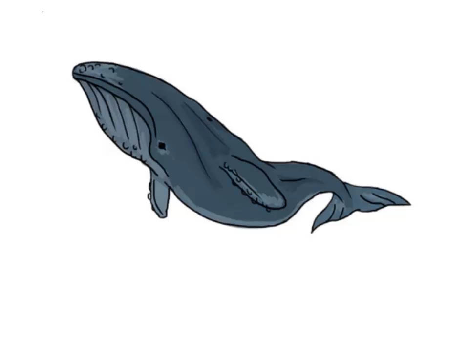 960x720 How To Draw A Whale (With Pictures)