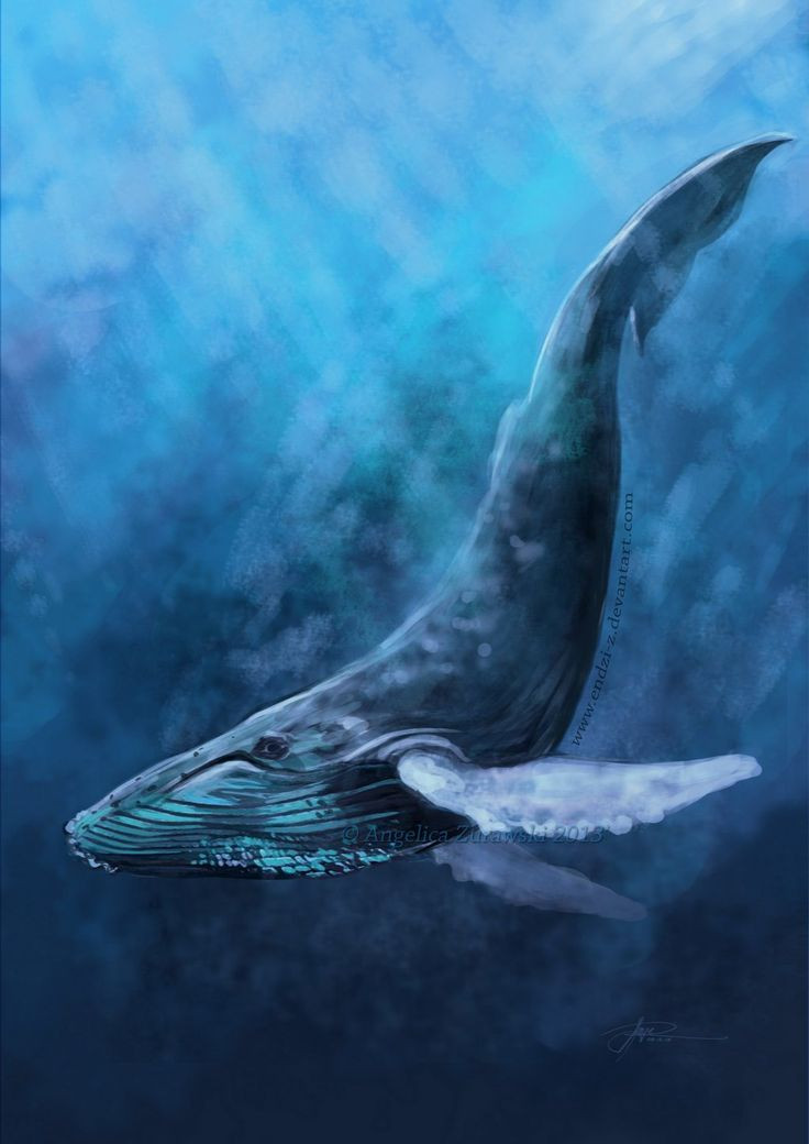 736x1040 Immediately Pics Of Whales Best 25 Whale Drawing Ideas
