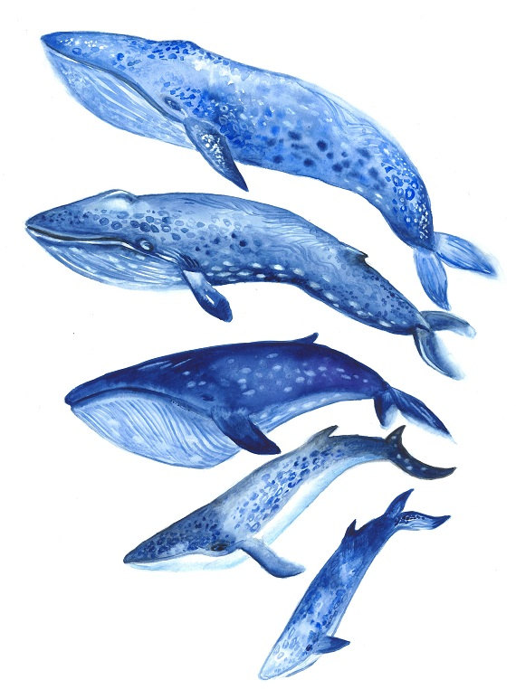 570x762 Whales By Natalia Turea Whales Watercolor