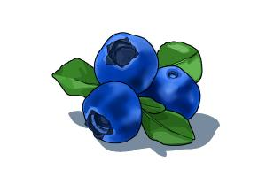 300x200 How To Draw A Blueberry