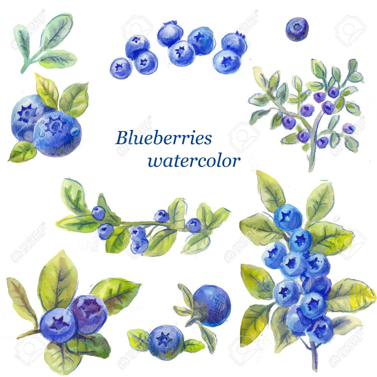 1300x1300 Set Of Blueberry Watercolor Drawing By Hand Isolated On White