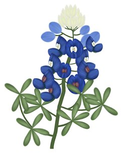 bluebonnet flower drawing at getdrawings com free for personal use rh getdrawings com texas bluebonnet clipart bluebonnet clipart border