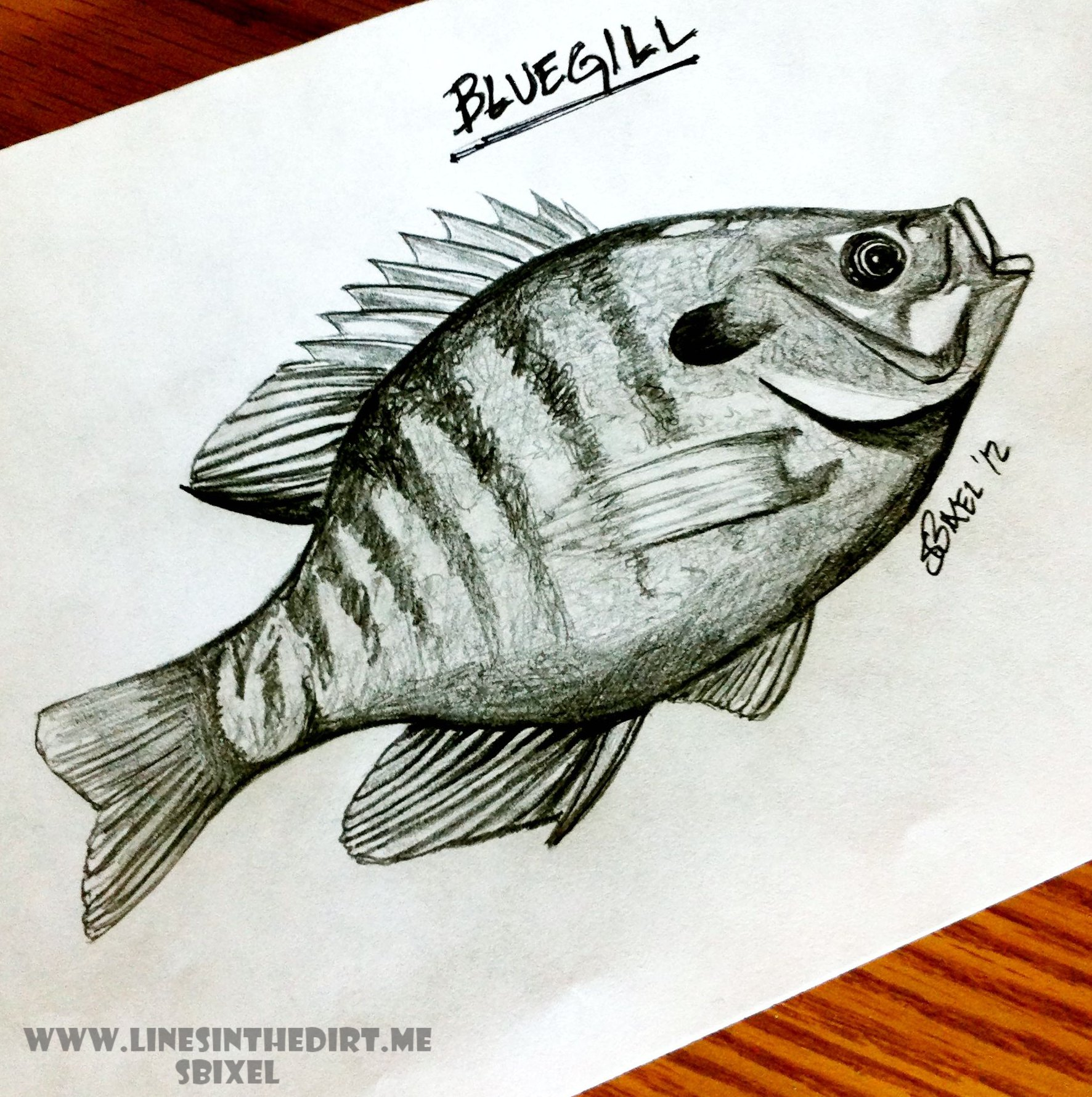 1772x1780 Bluegill Lines In The Dirt