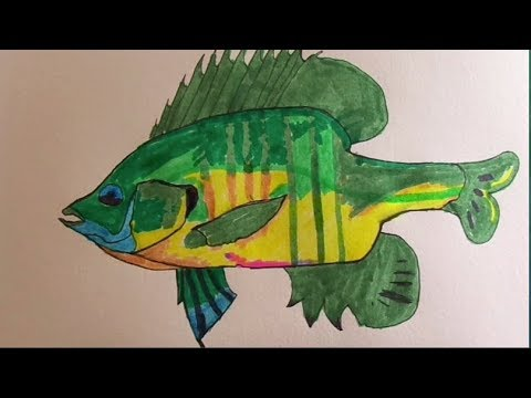 480x360 Fish Drawing! Ep.1