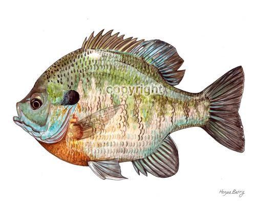 500x400 Bass Fish Paintings