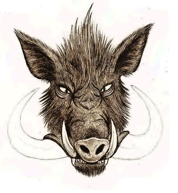 584x633 97 Best Wild Boar Drawing, Painting Images On Wild
