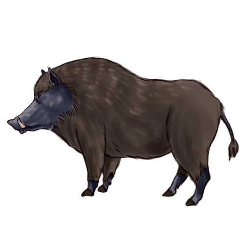 500x500 How To Draw A Boar 6 Steps (With Pictures)
