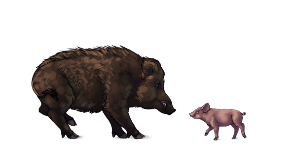 600x330 How To Draw Pigs, Wild Boars And Warthogs By Monikazagrobelna