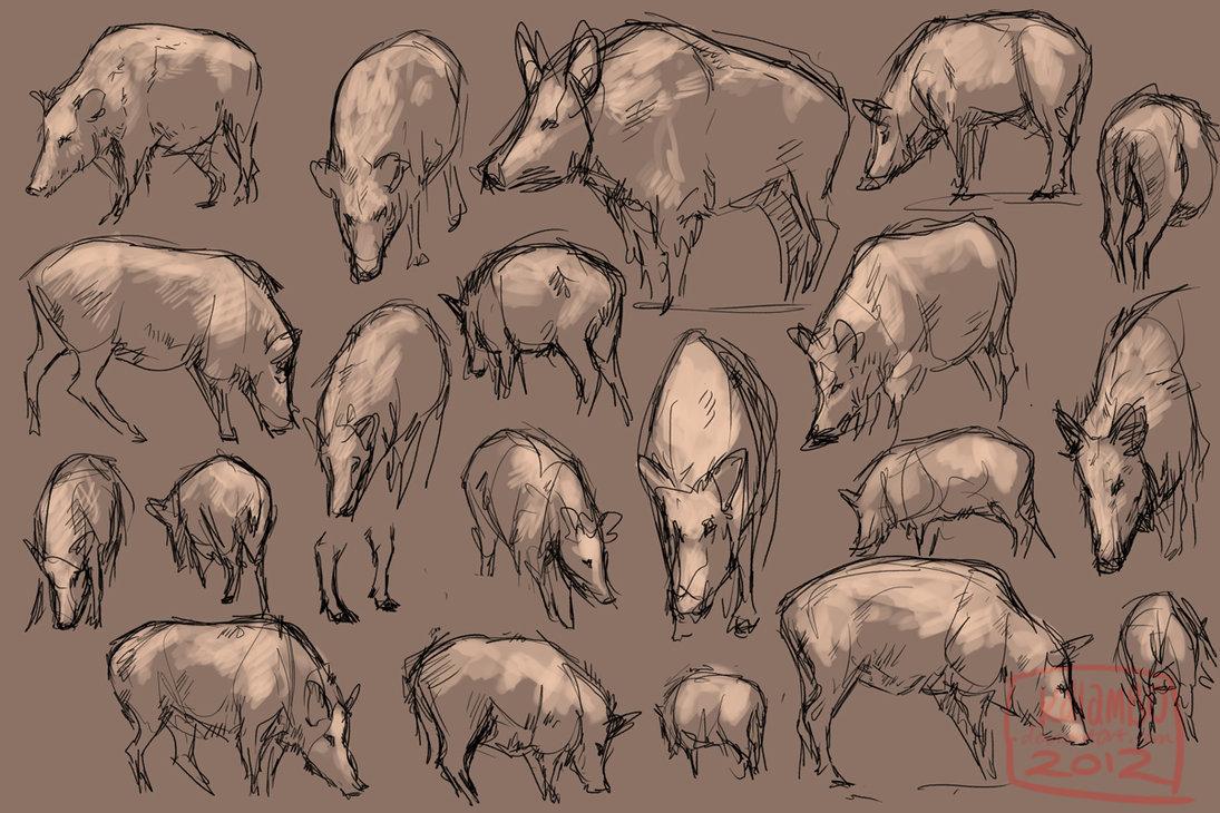 1095x730 Wild Boar Studies By Kalambo