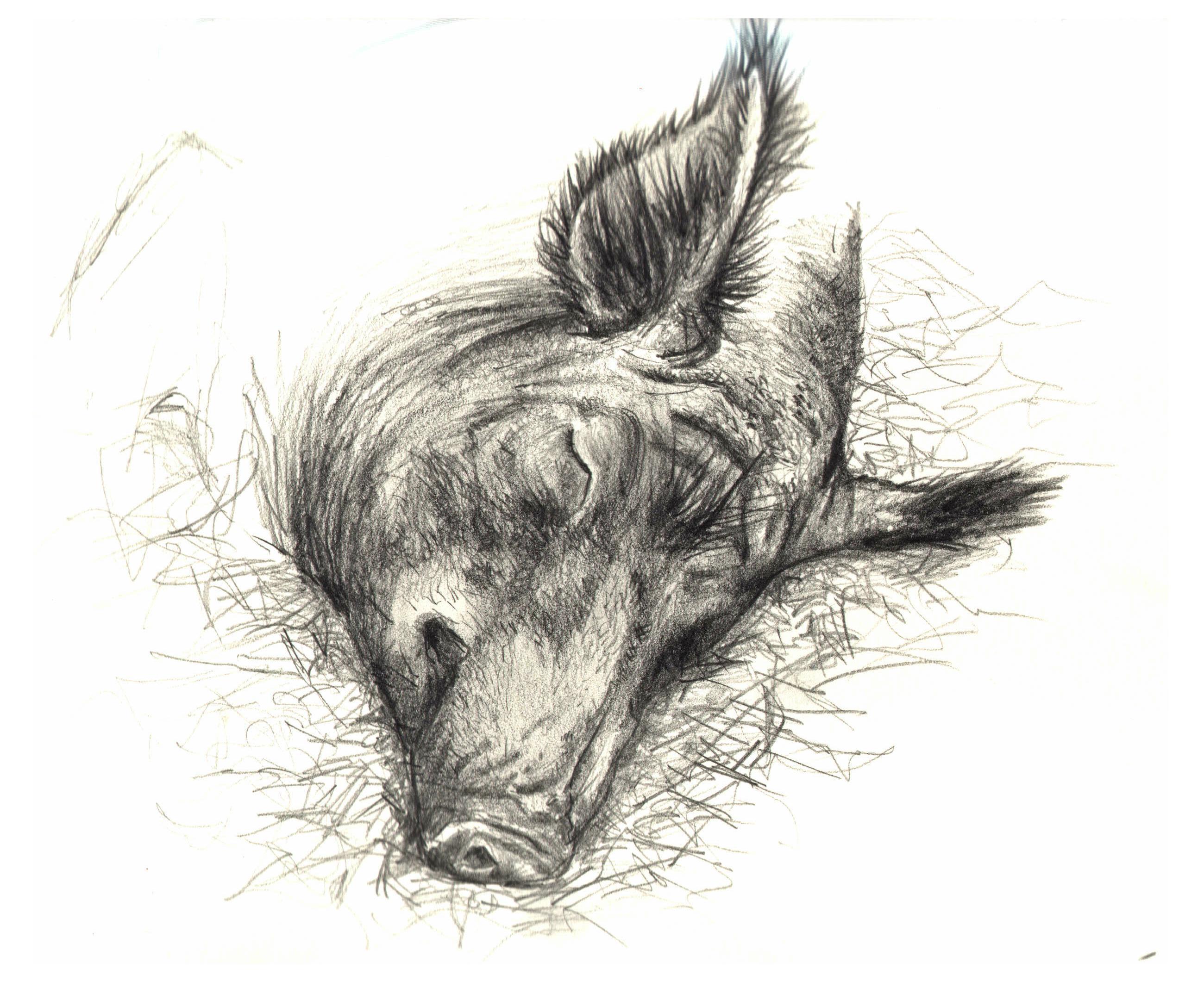 2600x2120 Wild Boar By Lindseydearnley