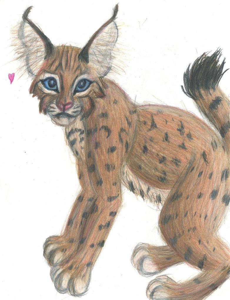 782x1021 Bobcat Cub Drawing By Ohioeriecanalgirl