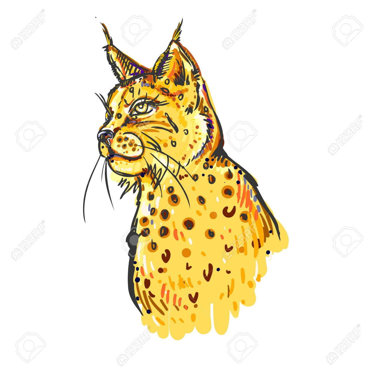 1300x1300 Hand Drawn Color Bobcat On White Background. Design For Poster