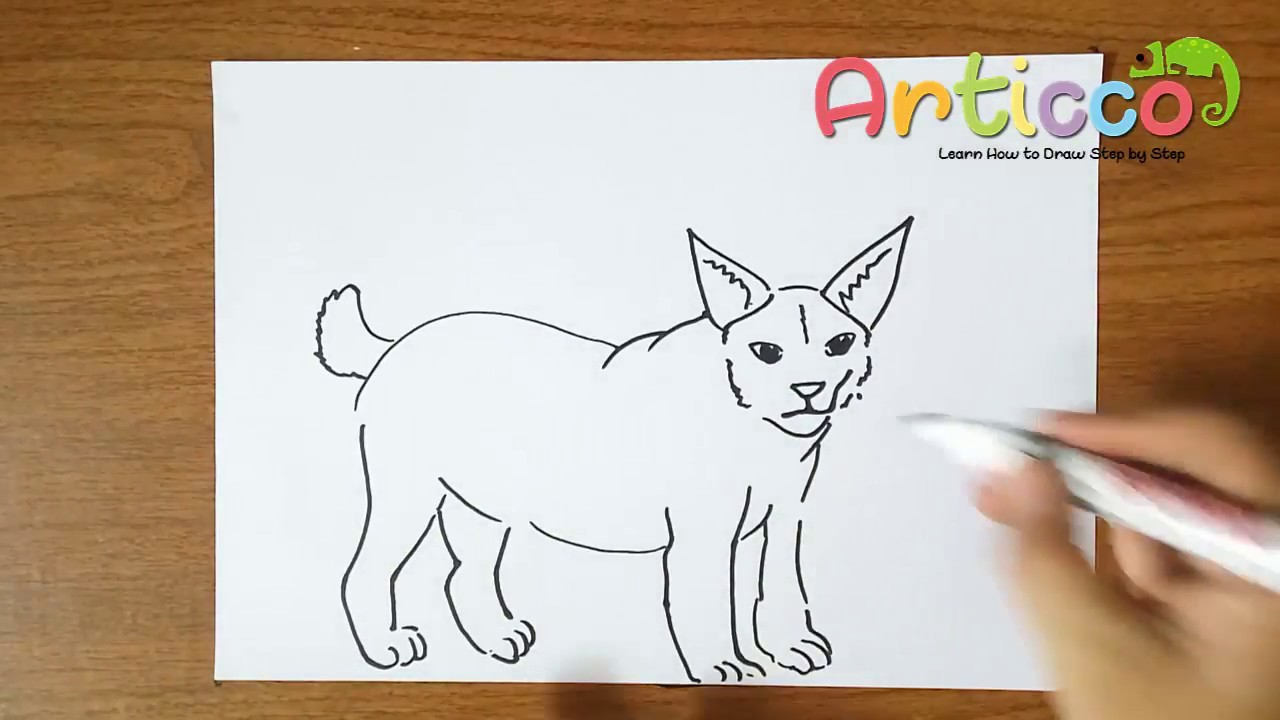 1280x720 How To Draw Bobcat Step By Step For Kids