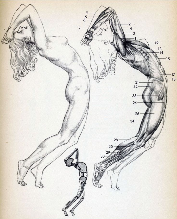 736x914 72 Best Anatomy For Artists Whole Body Images