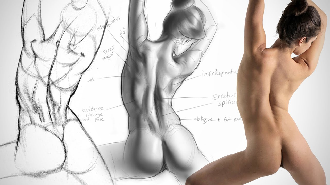 1280x720 Anatomy Drawing Critiques