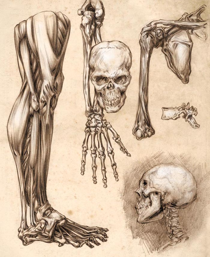 700x855 Human Anatomy Diagram Bone Human Anatomy Drawings Head Simple