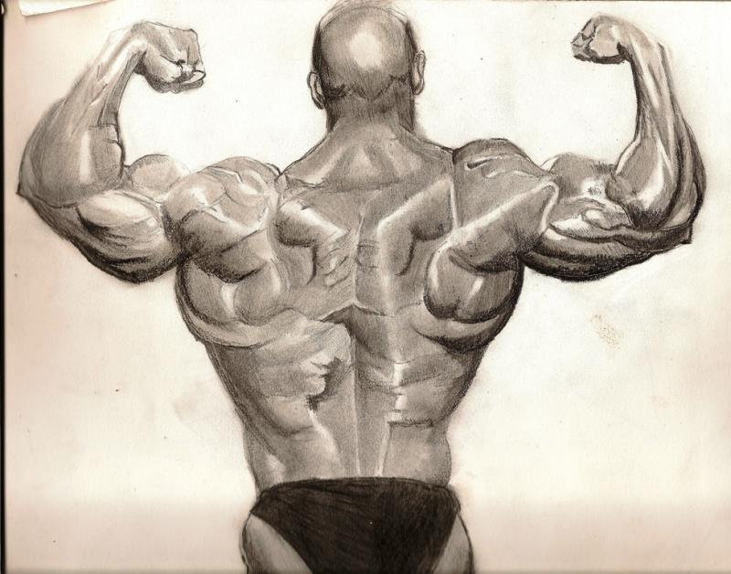 800x628 Bodybuilder Back View