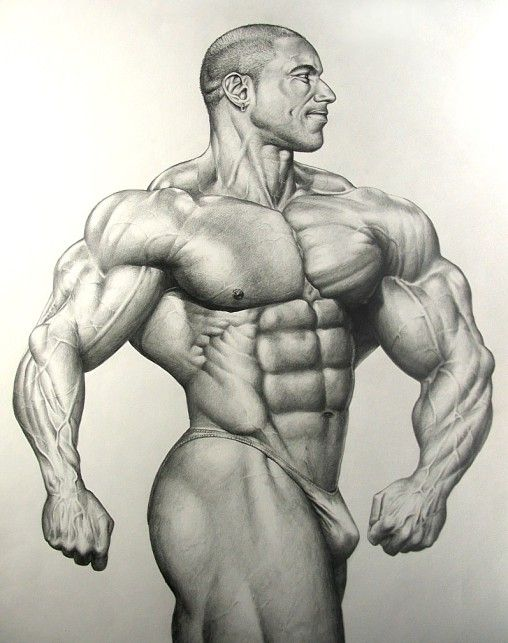 508x643 Bodybuilder Drawing Free E Book