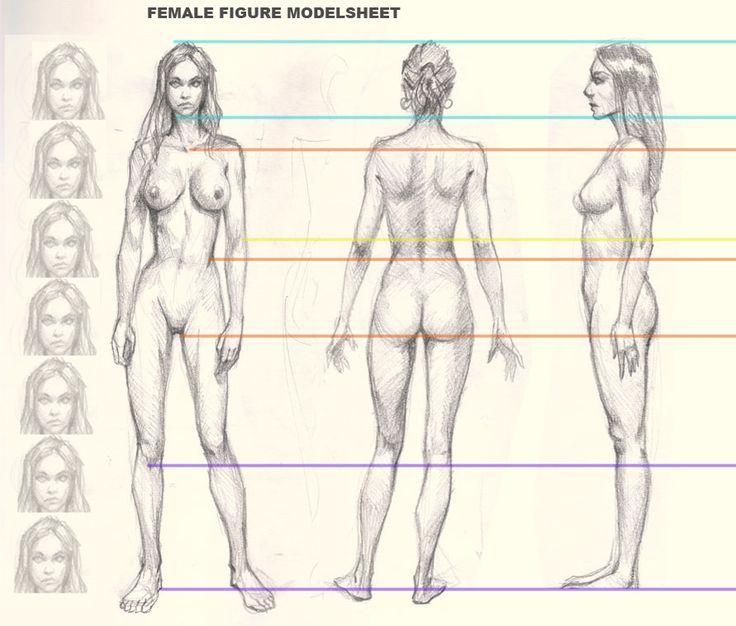 736x626 Gallery Women Body Drawings,