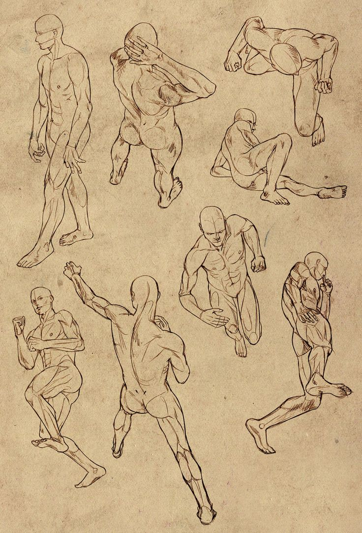 736x1082 Body References For Drawing 159 Best Male Body Poses Images