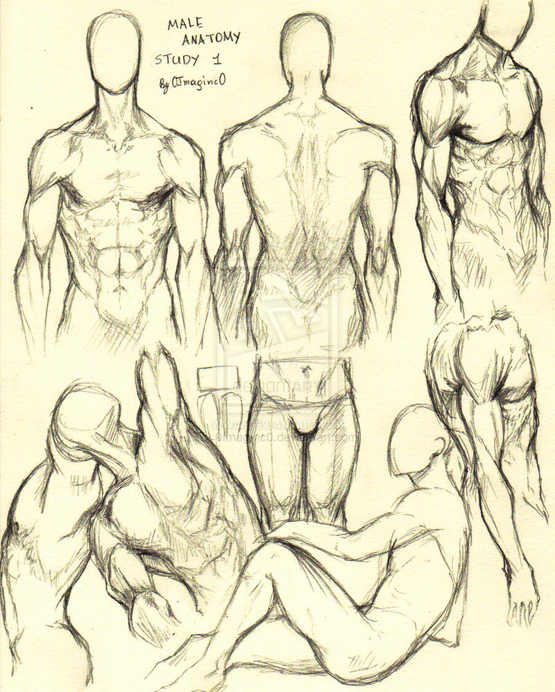 Body Study Drawing at GetDrawings.com | Free for personal use Body ...