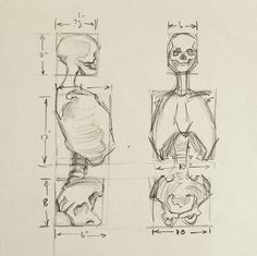 236x235 Pencil On Paper Human Anatomy Study Of Skeleton. Unsigned