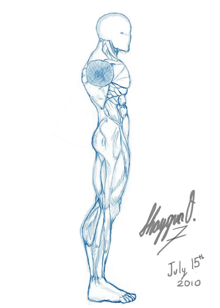 755x1057 Male Anatomy Template Side By Shintenzu