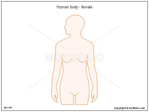 500x375 Human Body