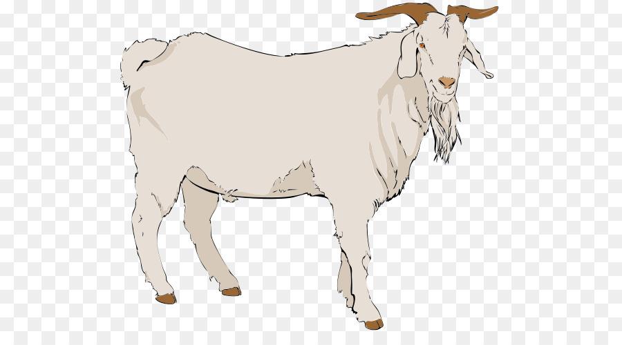 900x500 Boer Goat Anglo Nubian Goat Pygmy Goat Nigerian Dwarf Goat Clip