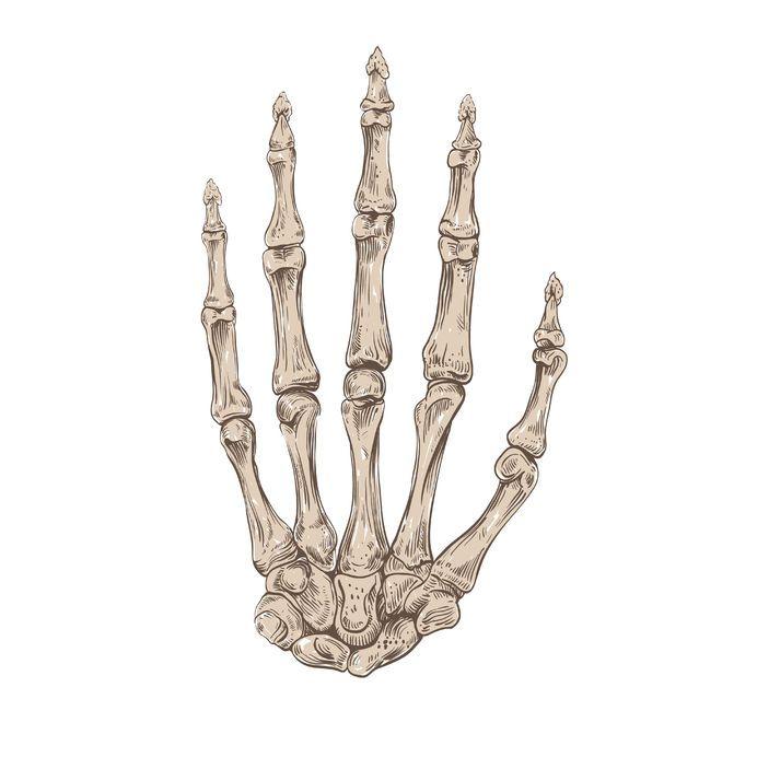 692x692 Understanding The Bones Of The Human Hand To Improve Your Hand