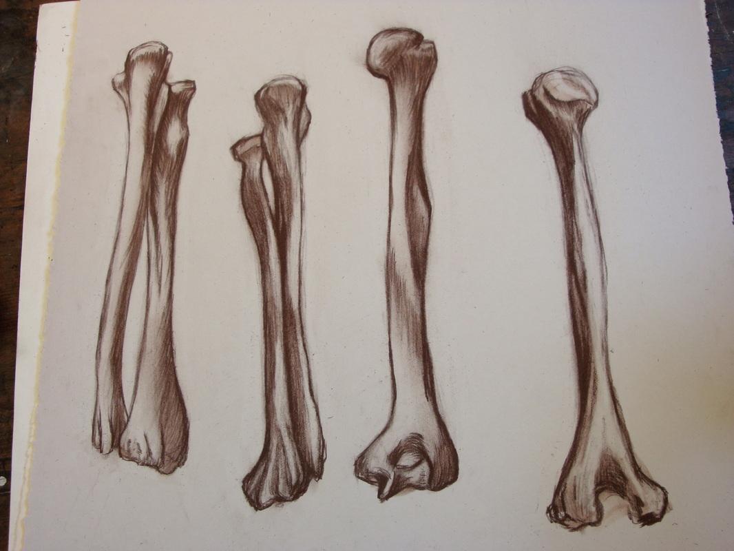 1066x800 4976367 Orig.jpg Me Hand Bone Anatomy