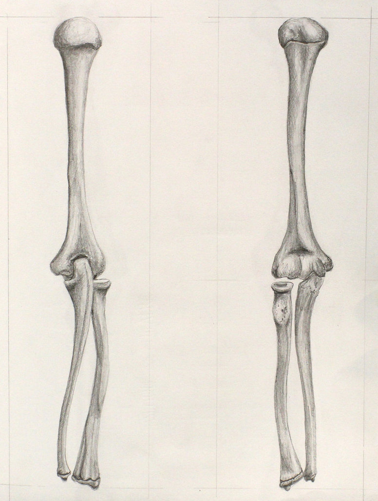 776x1029 Bones Of The Arm By Eekxpo