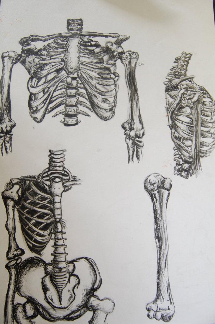 729x1096 Da Vinci Style Drawing Of Bones By Hannahlouisebailey