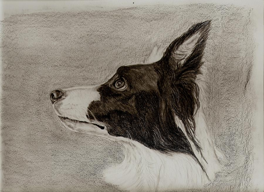 900x654 Border Collie Drawing By Joan Pye