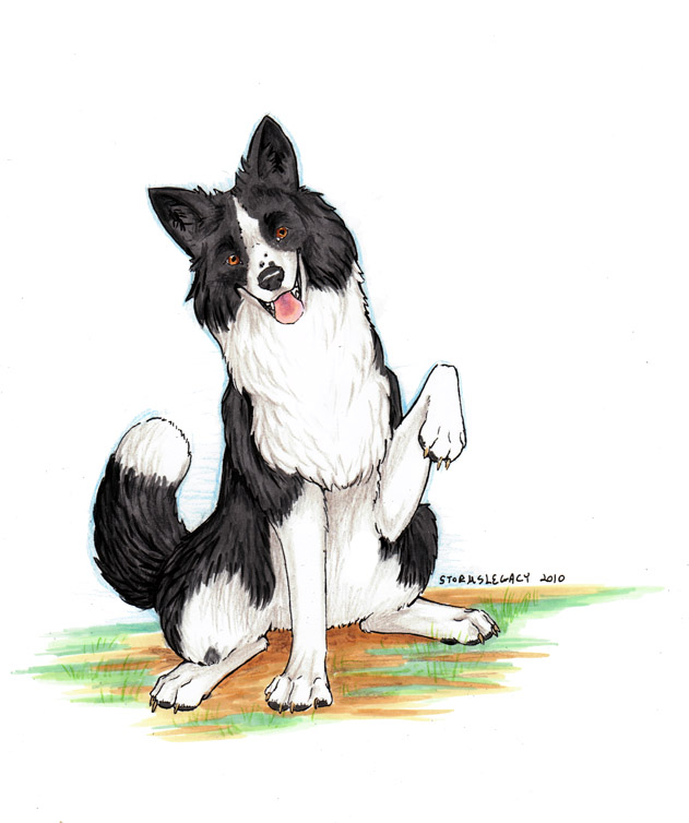 631x754 Border Collie By Stormslegacy