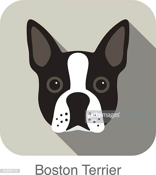 544x612 Astonishing Marvelous How To Draw A Boston Terrier Best Of Image