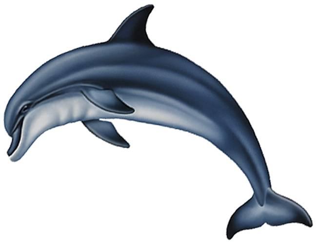650x499 3313 Bottlenose Dolphin A Baby Recursos Para Proyectos