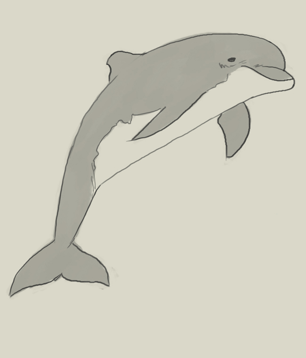 600x702 How To Draw Dolphin