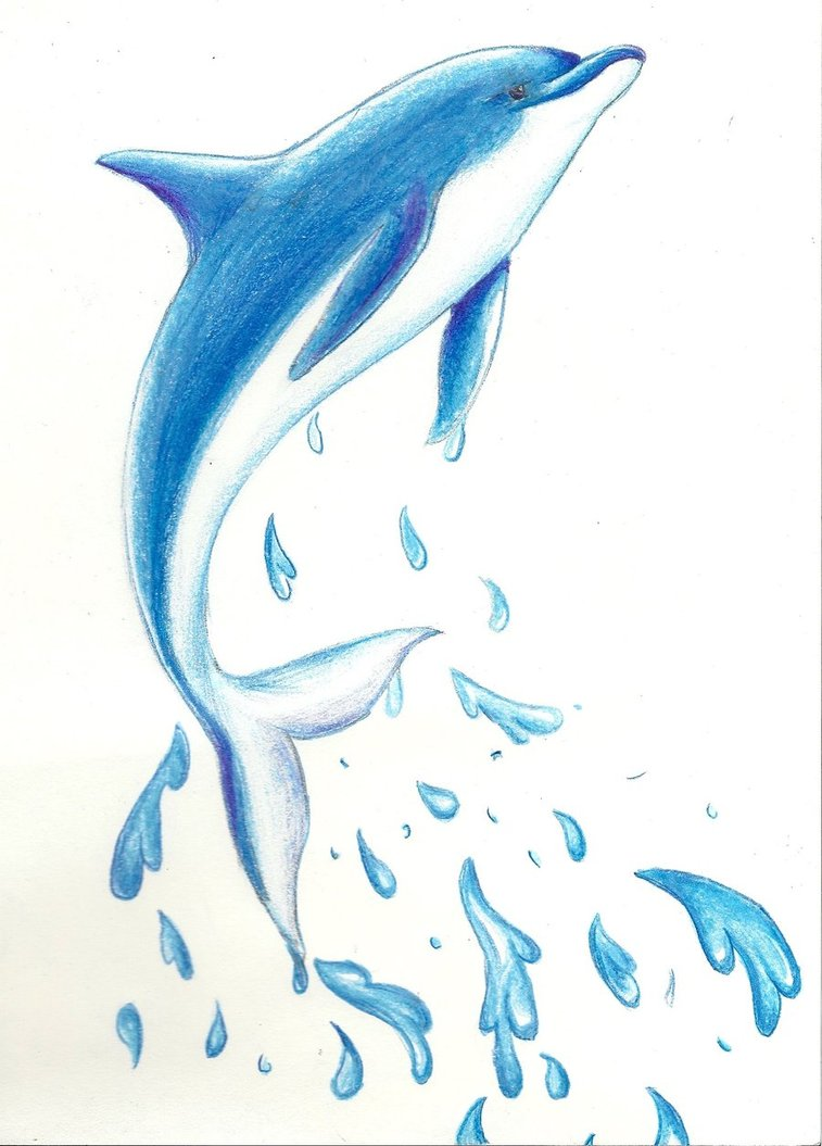 757x1055 Dolphin Drawing