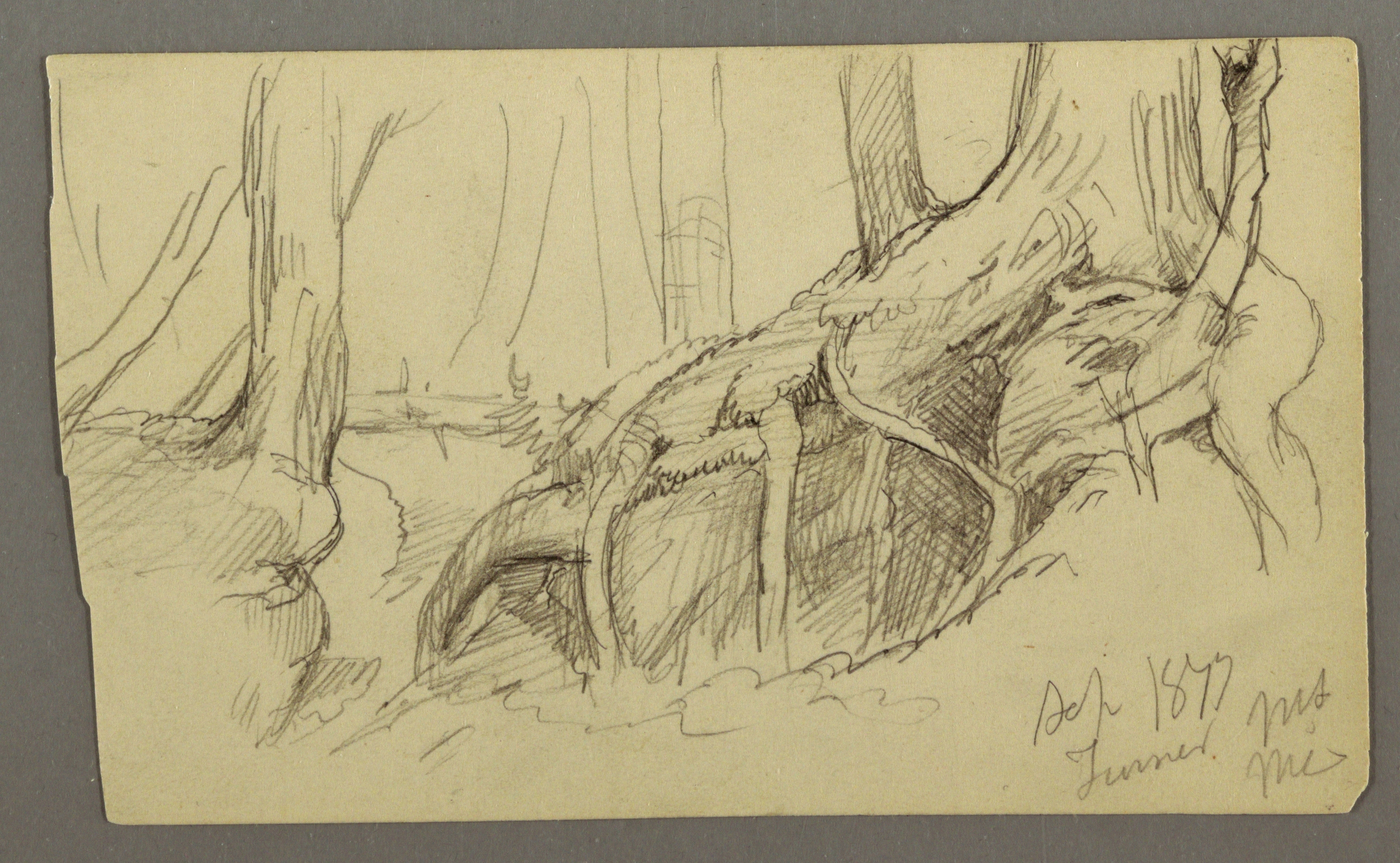 3010x1857 Filedrawing, Tree Rootsgrowing Over A Boulder (Turner Mountain