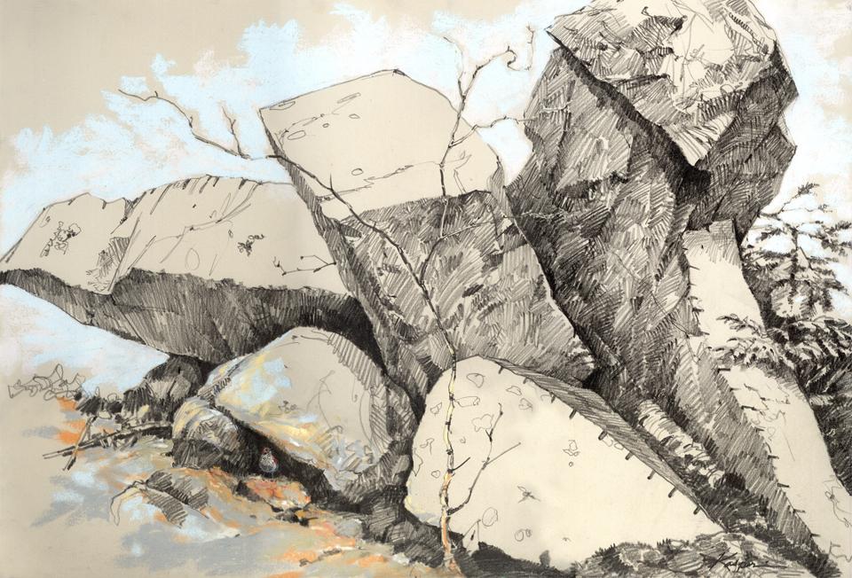 960x652 Quarrythrush3 2.jpg How To Draw Realistic Trees