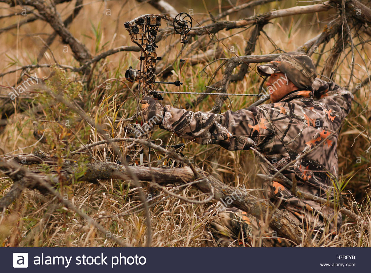 1300x956 Hunter Drawing Bow For Ground Hunting Stock Photo 125292591