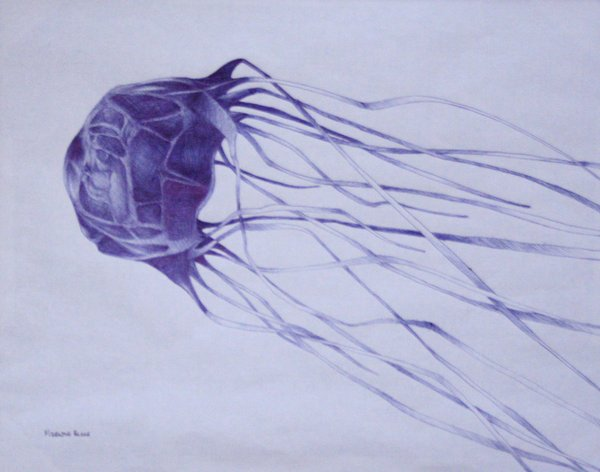 Line Drawing Jellyfish : Box jellyfish drawing at getdrawings free for personal use