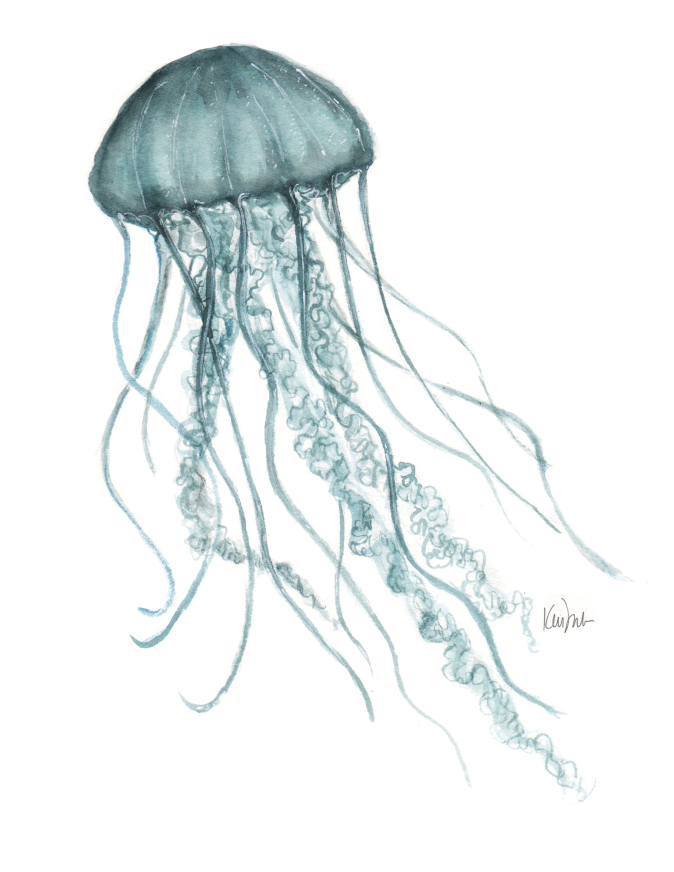 Box Jellyfish Drawing at GetDrawings