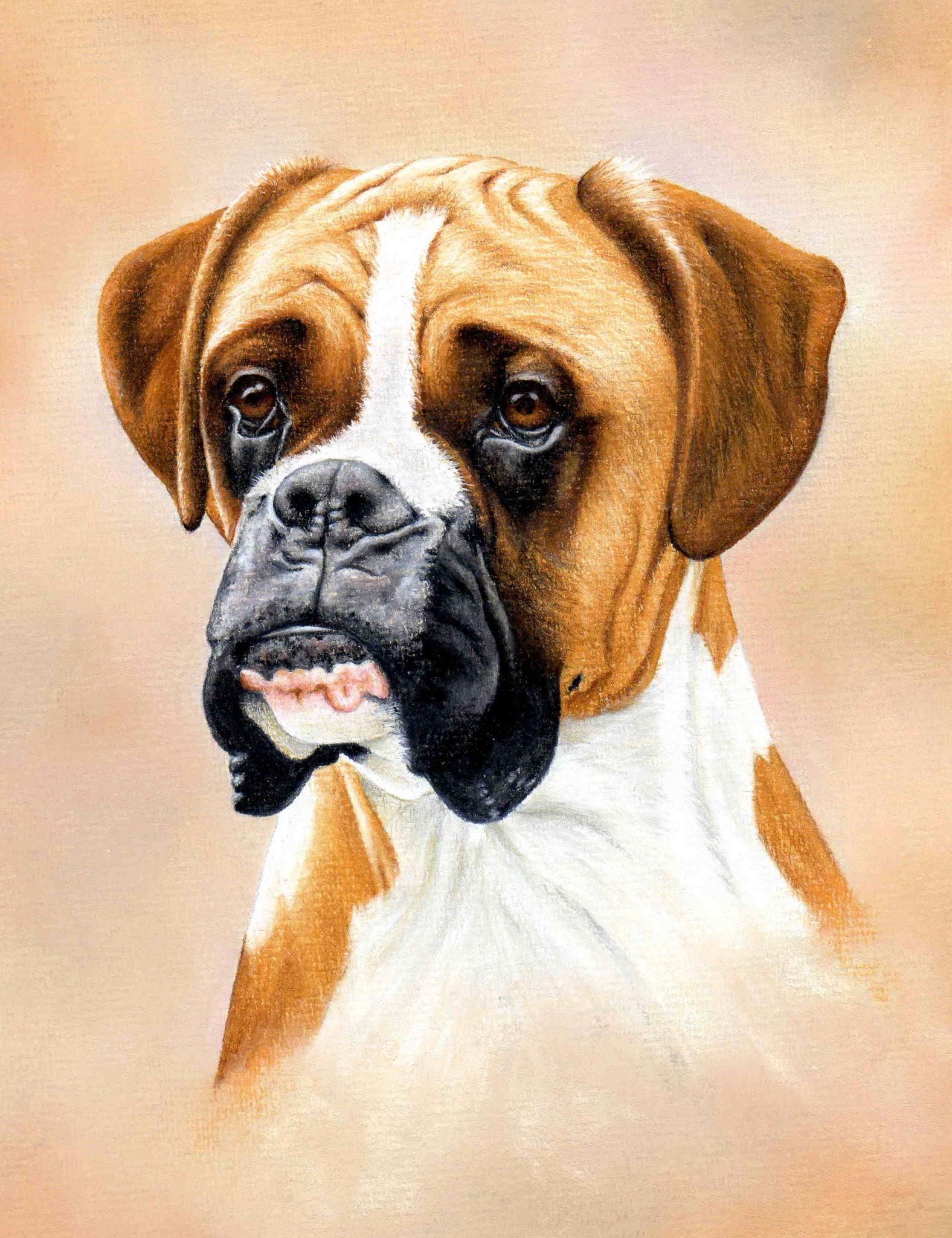 1576x2048 Boxer Dog [Video Course]