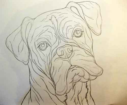 500x412 Gallery For Gt Boxer Dog Head Drawing Sketchy Dog