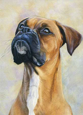 327x450 I Spy Boxer Dog By Laura Hardie