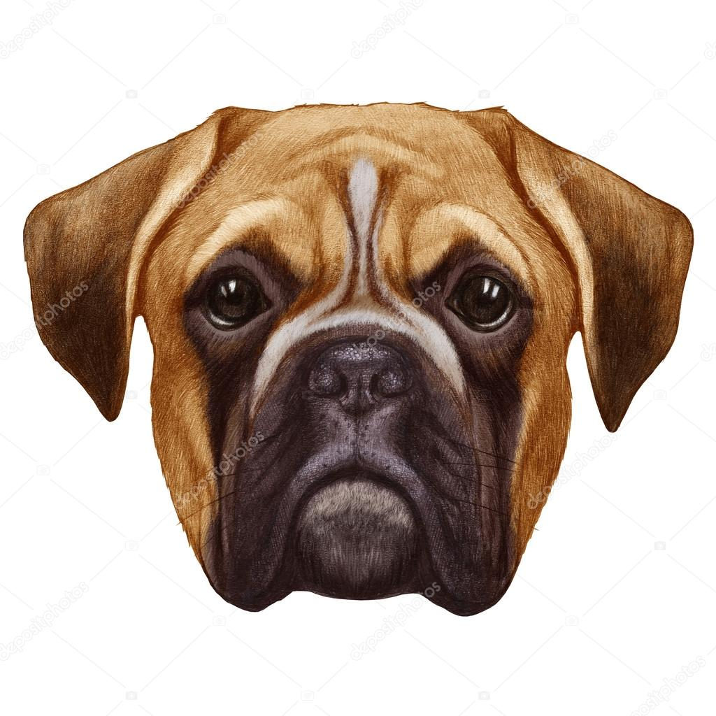 1024x1024 Original Drawing Of Boxer Dog Stock Photo Victoria Novak