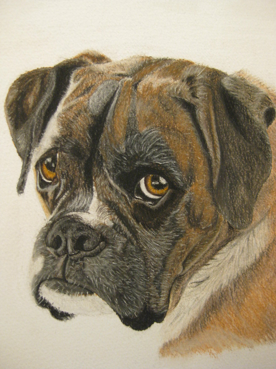 900x1200 Our Old Boxer Dog, Mini By Teeceerrr
